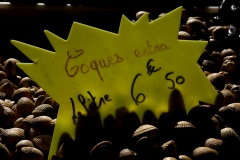 Coquillages_1